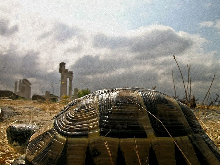tortoise view of Pergamon jpg