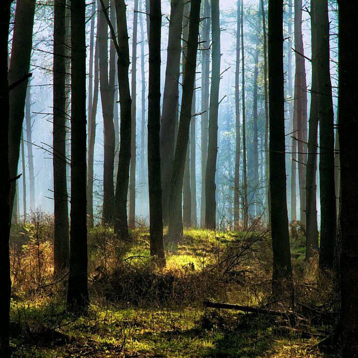 Forest-Blue.jpg