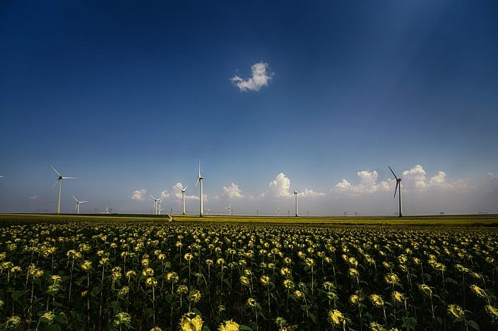 Sunflowers-and-wind-energy.jpg