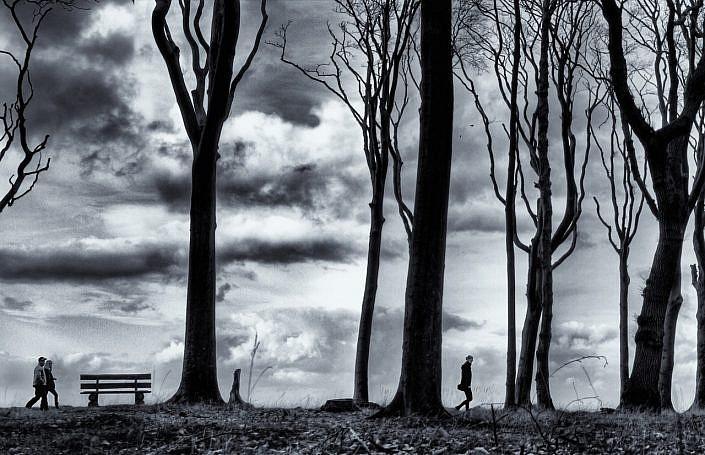 naked trees jpg