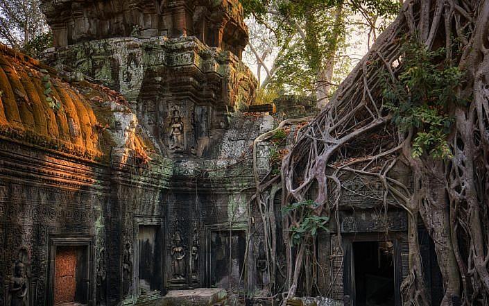 jungle temple ta prohm